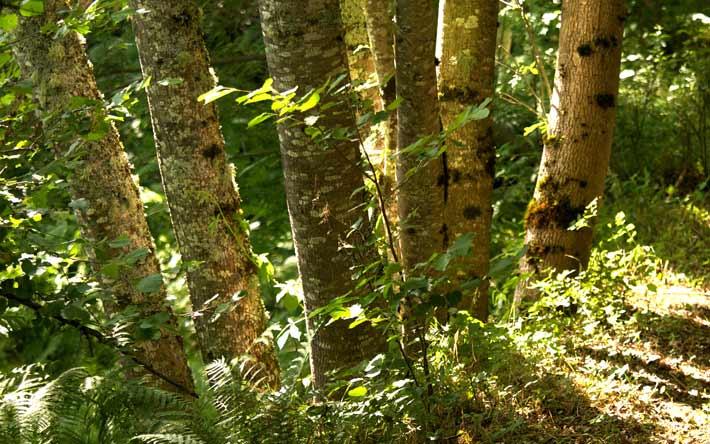 Des troncs dans la forêt.